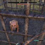Elder Scrolls Online - Caged Dog
